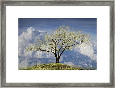 Hilltop Framed Print by Debra and Dave Vanderlaan