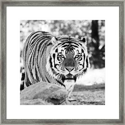 His Majesty Framed Print by Scott Pellegrin