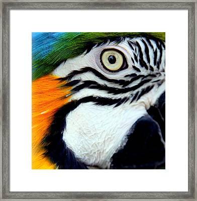 His Watchful Eye Framed Print by Karen Wiles