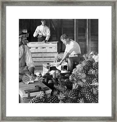 Historic Pineapple Factory - Florida - C 1906 Framed Print by International  Images