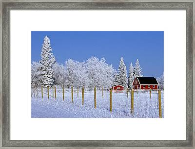 Hoarfrost On Trees Around Red Barns Framed Print by Mike Grandmailson