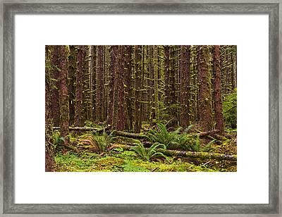 Hoh Rainforest Framed Print by Mark Kiver