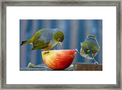 Holding The Apple Up Framed Print by Andrea Lightfoot