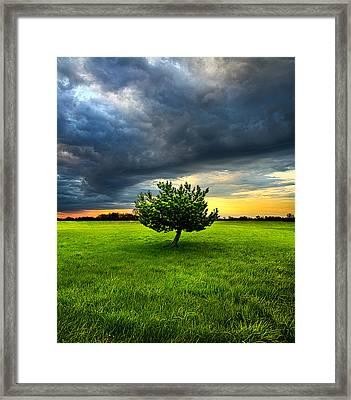 Home Alone Framed Print by Phil Koch