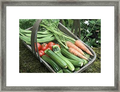 Home-grown Organic Vegetables Framed Print by Sheila Terry