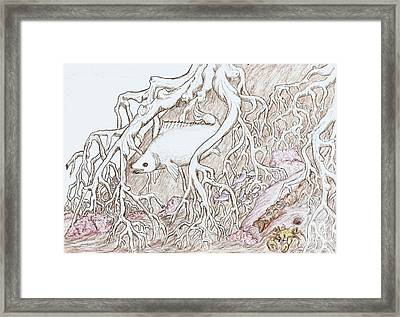 Home In Mangrove Roots  Framed Print by Desley Brkic
