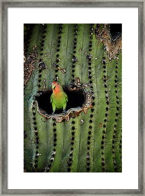 Home Sweet Home  Framed Print by Saija  Lehtonen
