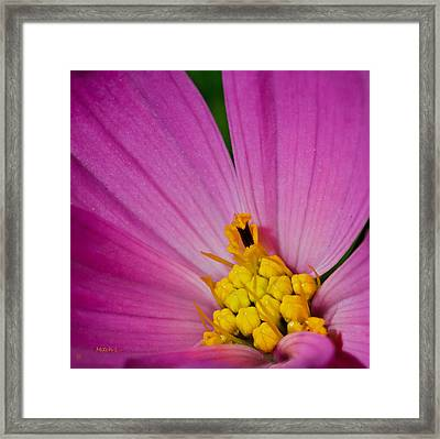 Honey Bee's Candy Dish Framed Print by Mitch Shindelbower