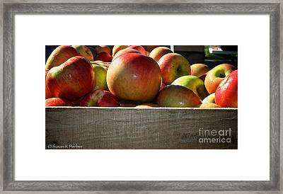 Honey Crisp Framed Print by Susan Herber