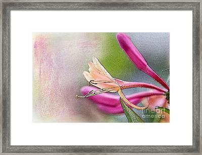 Honeysuckle Sweet Framed Print by Betty LaRue