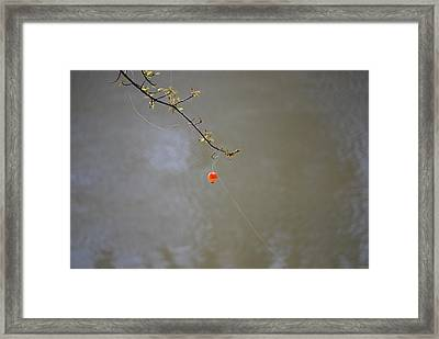 Hooked The Big One Framed Print by Kelly Rader