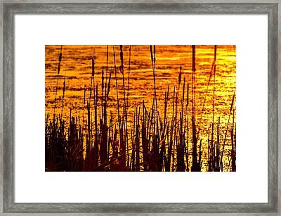 Horicon Cattail Marsh Wisconsin Framed Print by Steve Gadomski