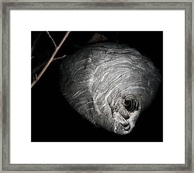 Hornet Nest Framed Print by David Kleinsasser