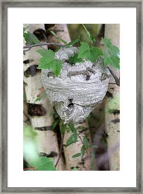 Hornet Nest Framed Print by Lawrence Lawry