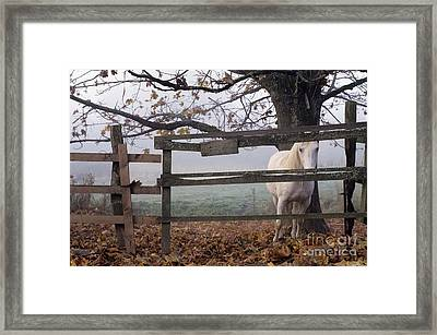 Horse At Fence Framed Print by Jim Corwin and Photo Researchers