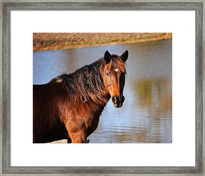 Horse By The Water Framed Print by Jai Johnson