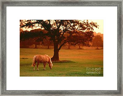 Horse Framed Print by Carl Purcell and Photo Researchers