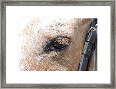 Horse Eye Framed Print by Jennifer Ancker