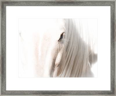 Horse Glow Framed Print by Toni Thomas