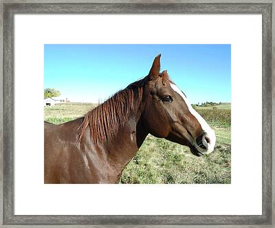 Horse In Chocolate Framed Print by Brian  Maloney