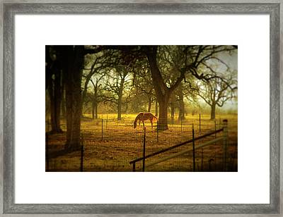 Horse In Morning Sun Eating Grass Framed Print by Photo by Jim Norris