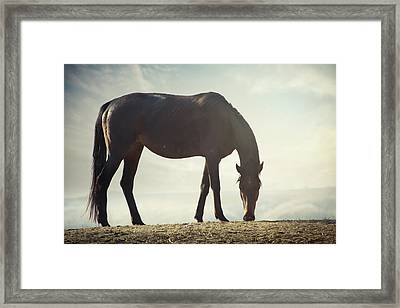 Horse In Wild Framed Print by Arman Zhenikeyev - professional photographer from Kazakhstan