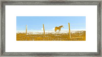Horse Pasture Revblue Framed Print by Paulette B Wright