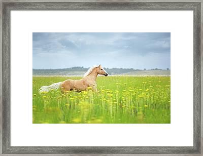 Horse Running In Field Framed Print by Arman Zhenikeyev - professional photographer from Kazakhstan