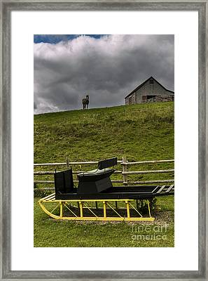 Horse Watching The Carriage Framed Print by Darcy Michaelchuk