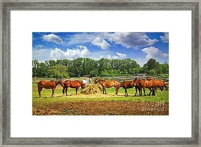 Horses At The Ranch Framed Print by Elena Elisseeva