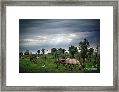 Eat Free Framed Print featuring the photograph Horses Eating by Carlos Caetano