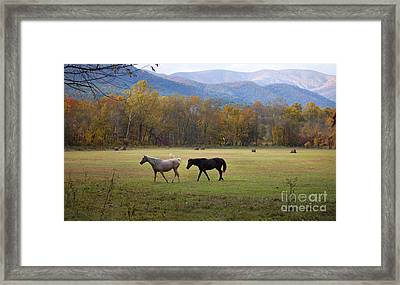 Horses Framed Print by Lena Auxier