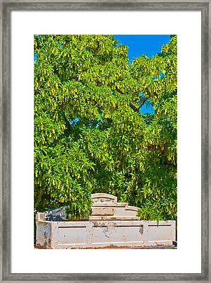 Horses No Longer This Way Come Framed Print by Paul Donohoe