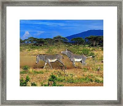 Horsing Around Framed Print by Tony Beck