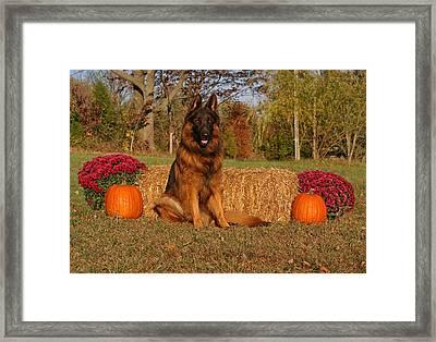 Hoss In Autumn II Framed Print by Sandy Keeton