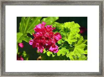 Hot Colors 03 Framed Print by Arik Baltinester