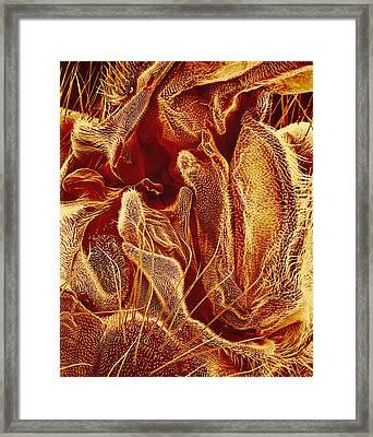 Hover Fly Body Surface, Sem Framed Print by Susumu Nishinaga