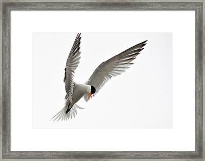 Hover Framed Print by Fraida Gutovich