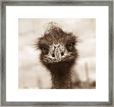 How Do You Do Framed Print by Douglas Barnett
