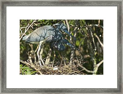 How Much Longer Framed Print by Carolyn Marshall