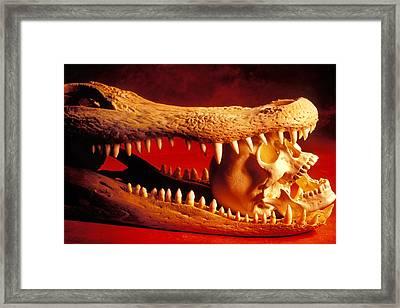 Human Skull  Alligator Skull Framed Print by Garry Gay