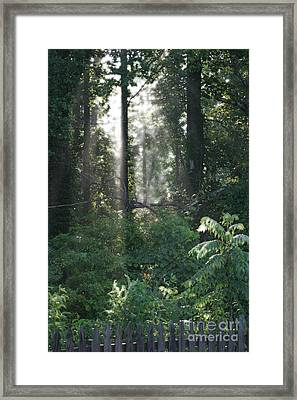Humid Framed Print by Cris Hayes