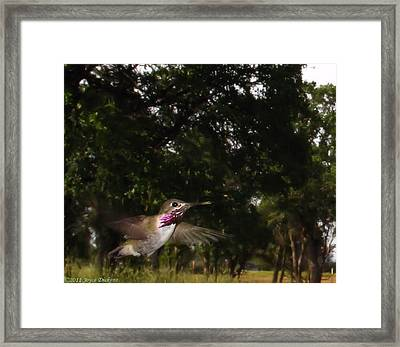 Hummer In Flight Framed Print by Joyce Dickens