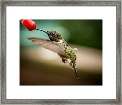 Hummers In The Garden Three Framed Print by Michael Putnam