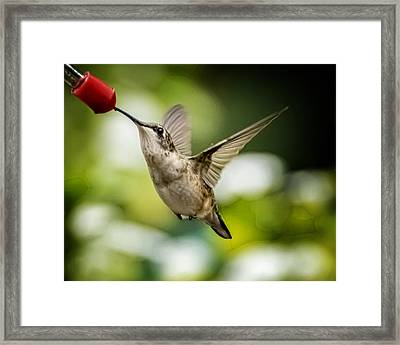 Hummers In The Garden Two Framed Print by Michael Putnam