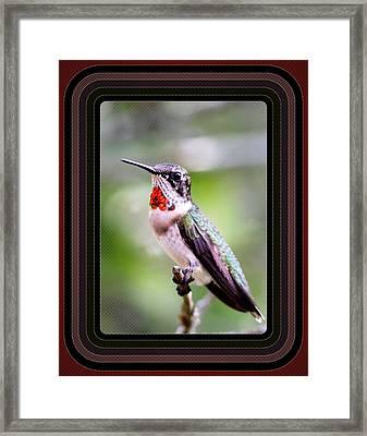 Hummingbird Card Framed Print by Travis Truelove