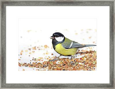 Hungry Bird Framed Print by MarcelTB
