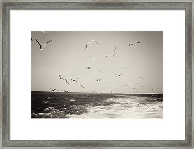 Hungry Framed Print by Jessica Wilson