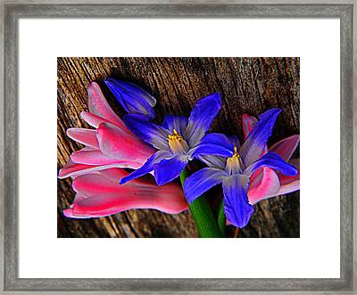 Hunt And Gather Framed Print by Chris Berry