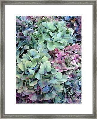 Hydrangea Flower Background Framed Print by Jane Rix